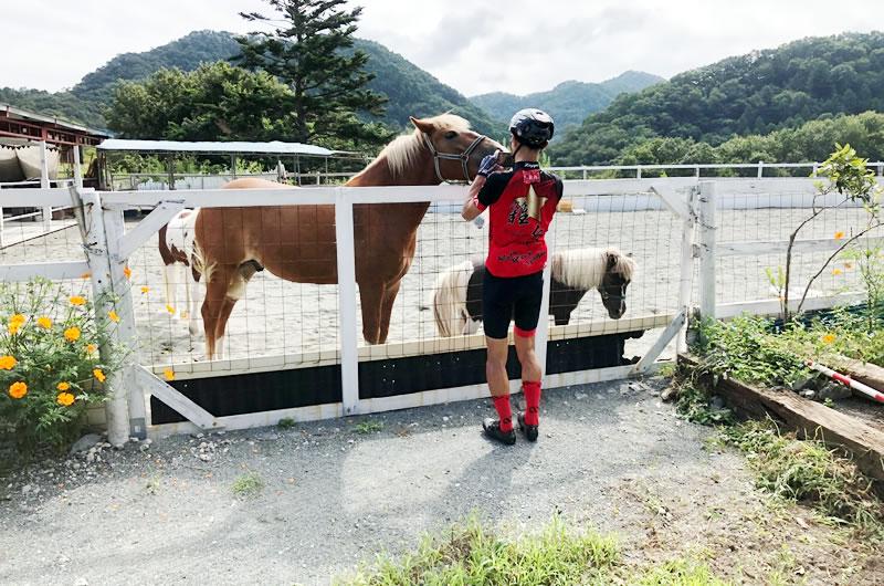 ダンシングよりもお馬さんと戯れよう(゚∀゚)!