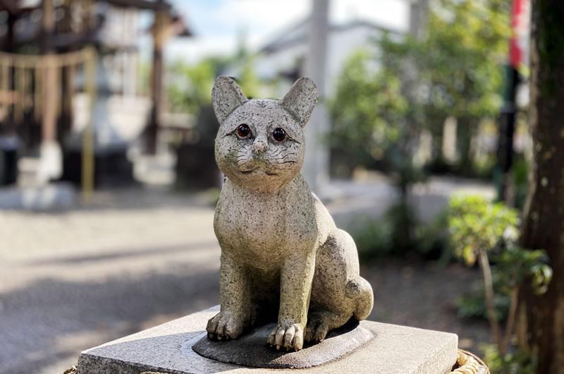 京丹後市の本家本元・狛猫に会いに行きたい!