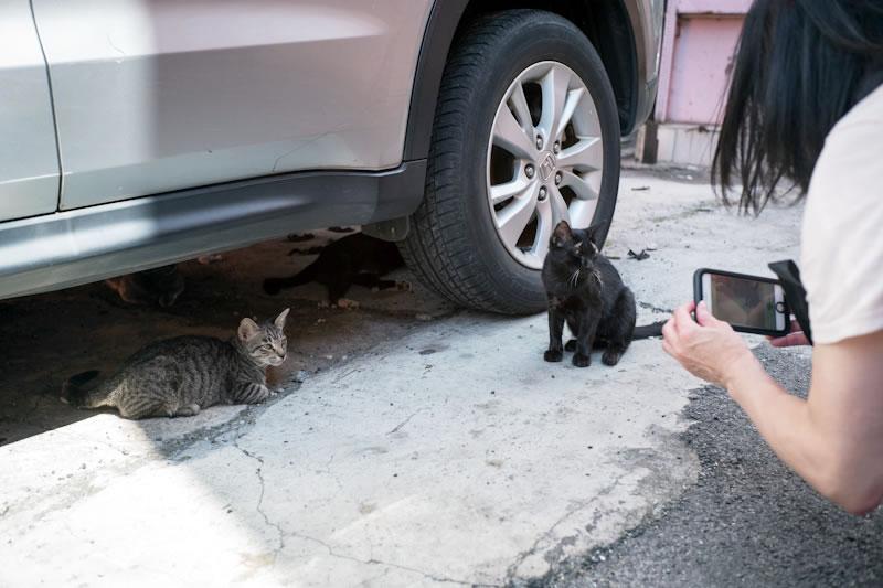 マレーシアは猫にやさしいからZAPPEIはここで合宿すべきだと思う