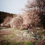 ターマックで桜誤認