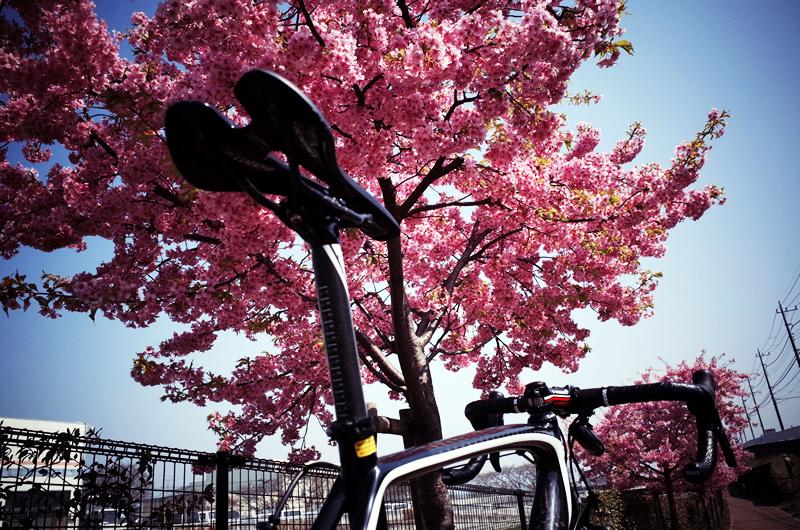 2015年初桜とターマック