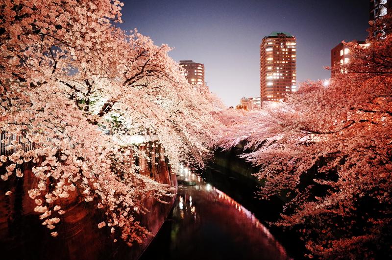 夜桜とターマック