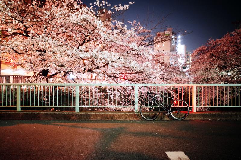 夜桜ターマック