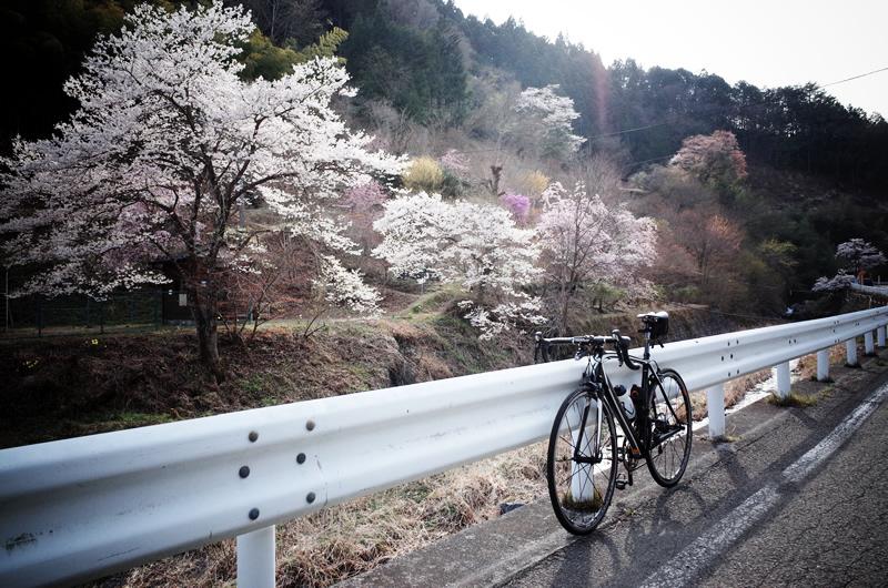奥多摩の桜とスペシャライズドターマック