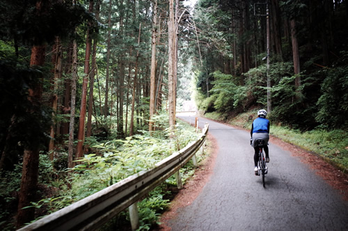 秩父の静かな林道