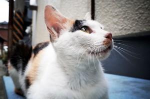 猫を撮りに瀬戸内海へ行ってきた