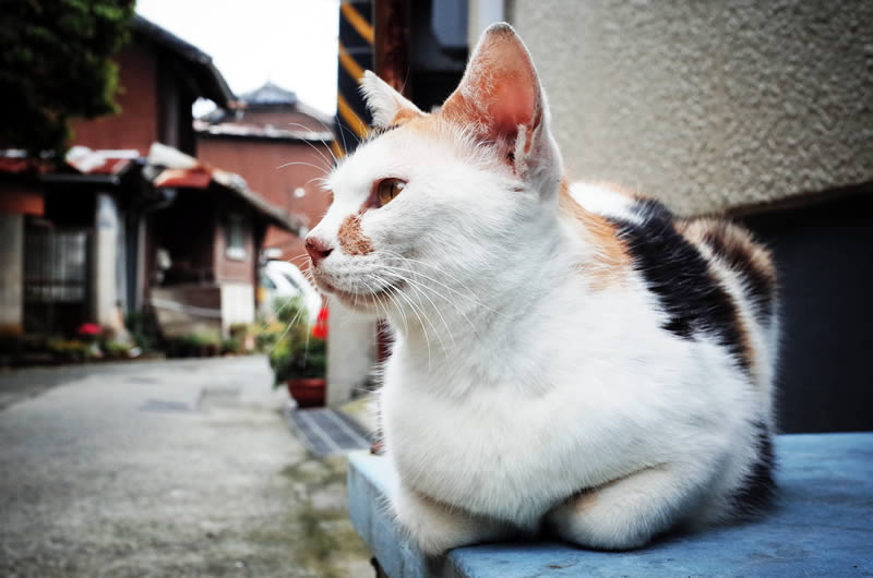 Strava猫