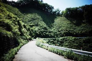 入山峠の峠道は禿げてる