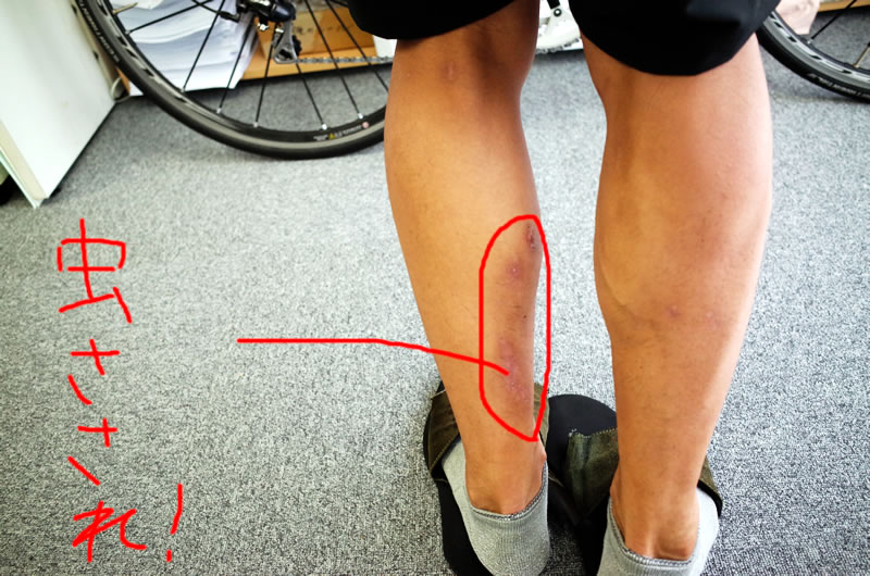 これが、ロードバイクで毎月400km走る男のふくらはぎだ!