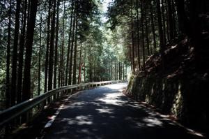 大弛峠の林道区間は最高!