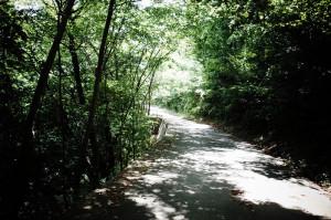 心地よい森の中、斜度は13% (-_-;)