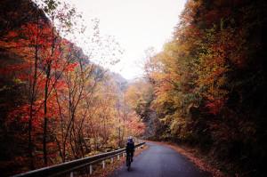 紅葉真っ盛りの大血川林道