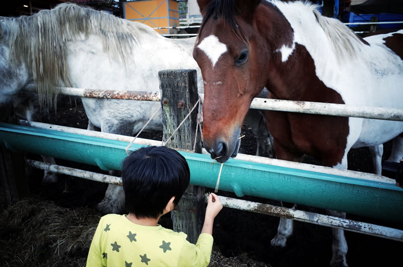 馬とも遊ぶ!