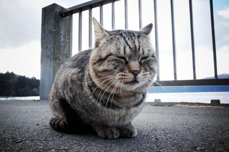 来年の福招く猫
