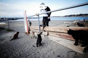 三浦半島は猫の楽園??