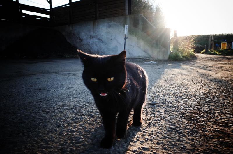 猫と出会うゆるポタもロードバイクの魅力