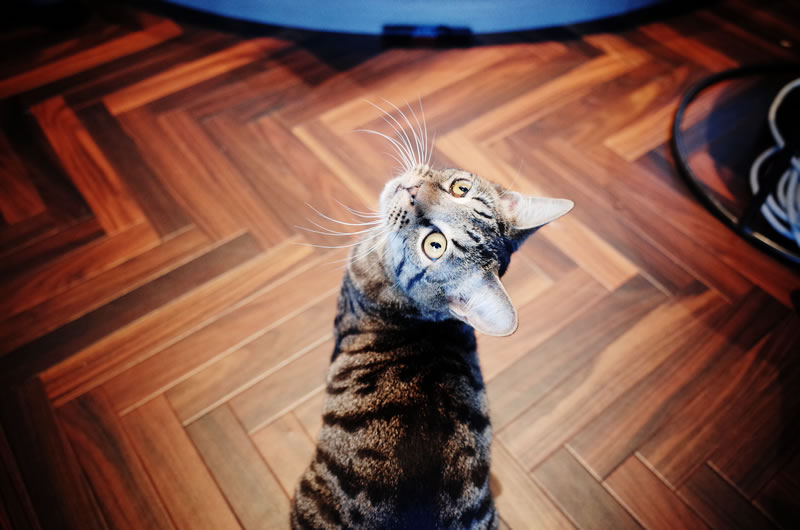 猫アレルギーは治るのか?