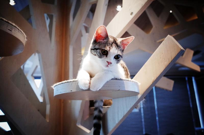 港みなとの猫に会いに行きたい!