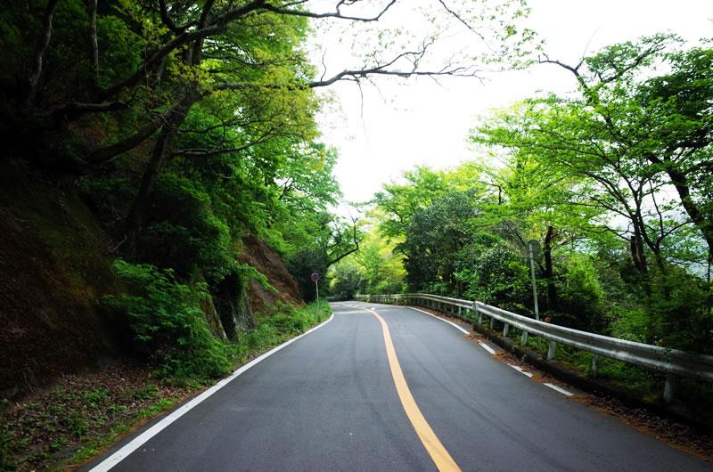 椿ラインは新緑のトンネル