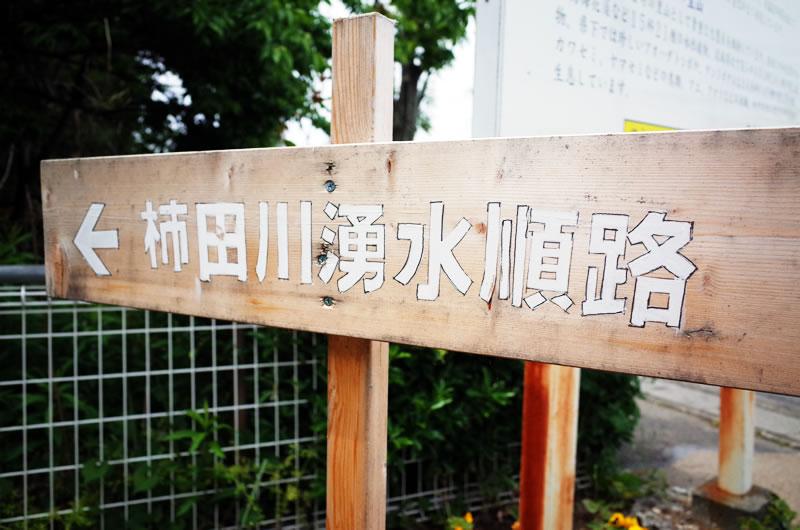 柿田川湧水を見学