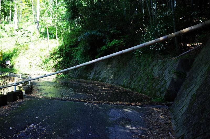 強風で竹が倒れた!