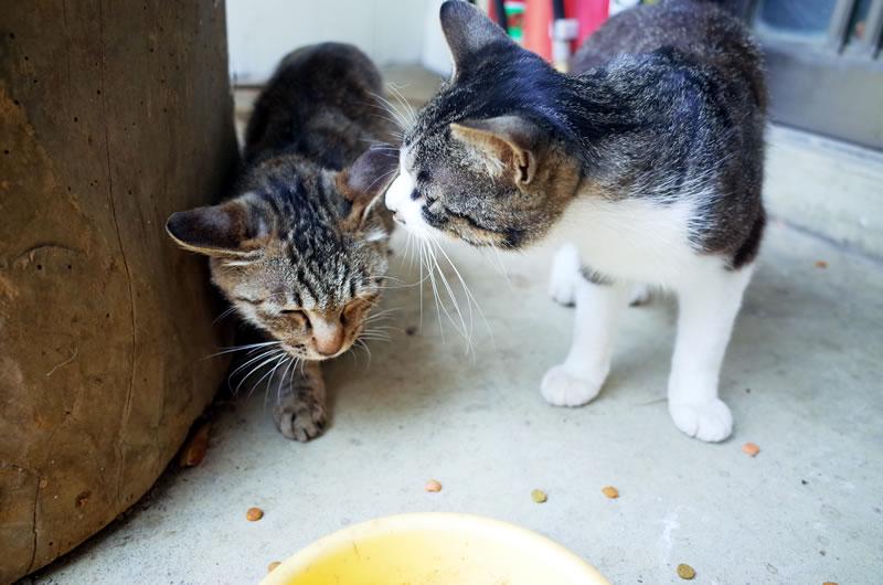 仲良しな猫さまにも会える^^