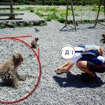 波勝崎苑では猿とも交流できます