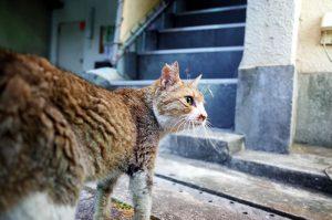 三島は猫の街!