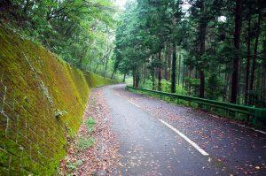 古賀志林道の下りは落ち葉と急カーブで怖いくらい