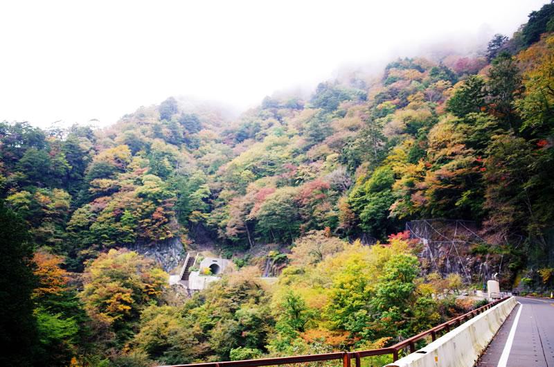 紅葉が始まっている柳沢峠