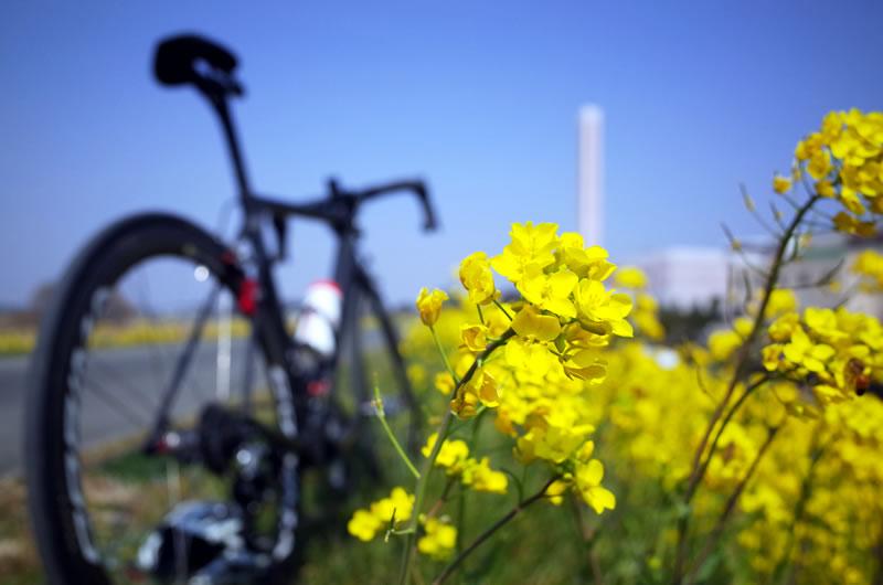 キャニオンを背景に一面の菜の花をパシャリ