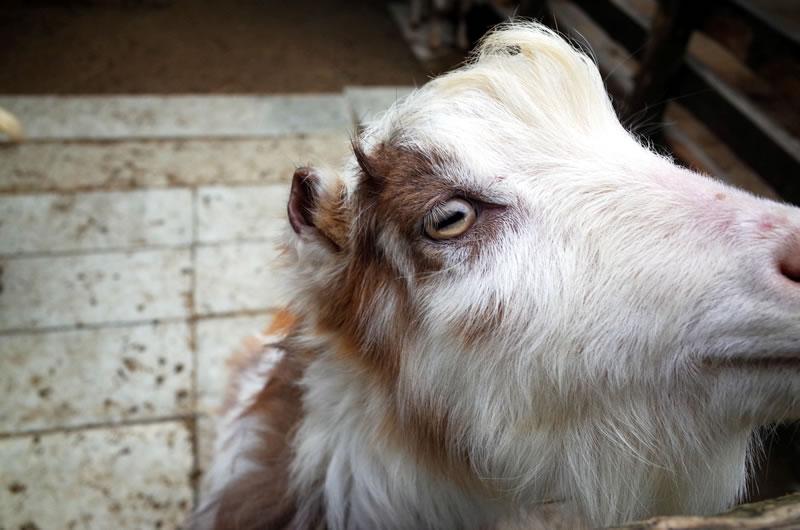 千本松牧場では動物とも触れ合えます