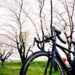 キャニオン・アルティメットに桜を見せてみた