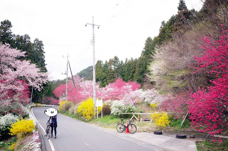 奥武蔵グリーンラインも春爛漫
