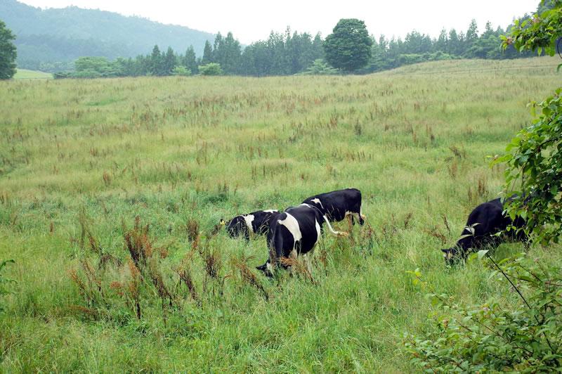 牛だようし、ウッシッシ(* ´艸`)