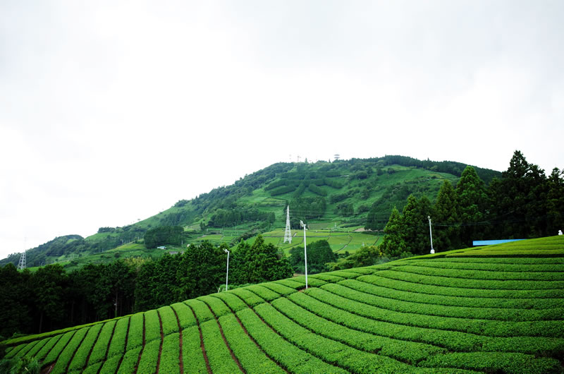 粟ヶ岳の目印は「茶」の文字