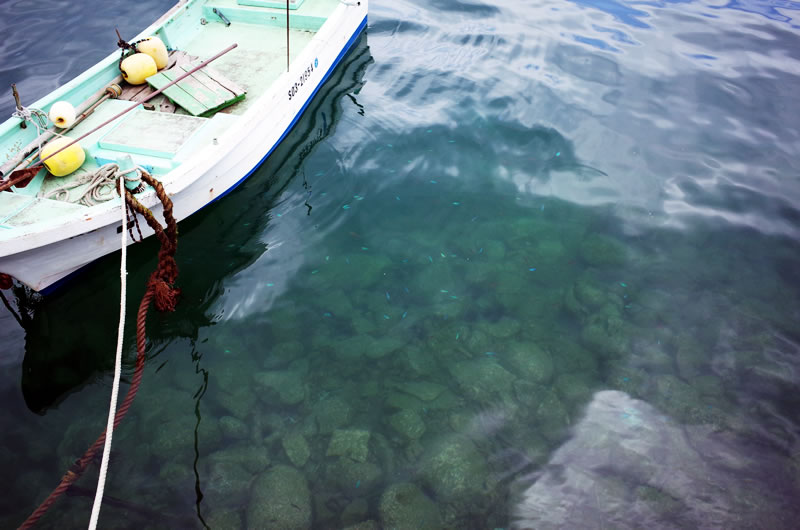 奇麗な海には魚がたくさん!