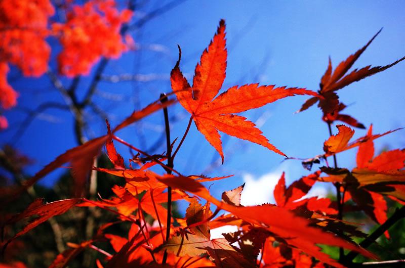 ヤビツ峠は紅葉真っ盛り!