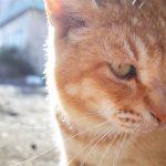 第2静岡猫と遭遇!
