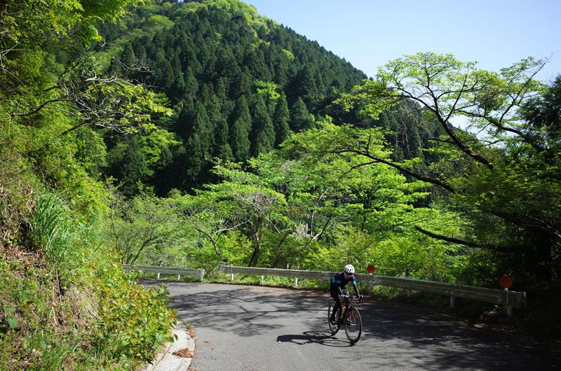 新緑の半原越をゆっくりロードバイクで上る