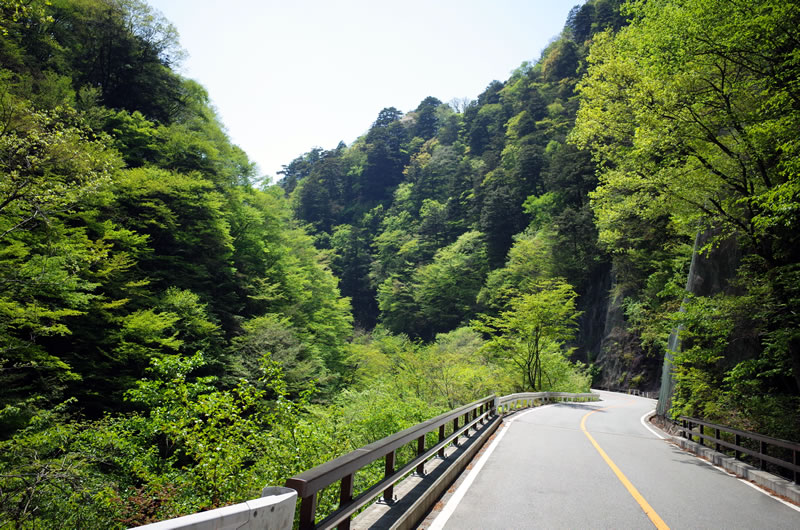 新緑美しい柳沢峠への道