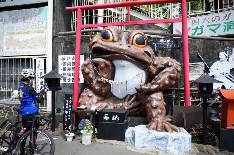 筑波山のガマガエルに会えた!