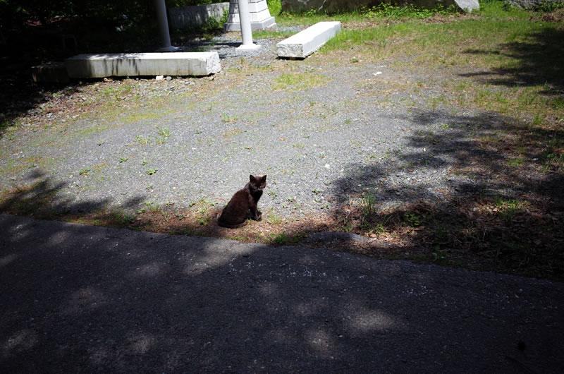 裏筑波山で猫との遭遇(*´ω`*)