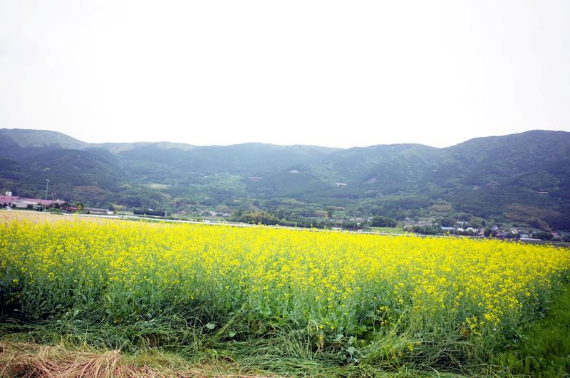 山が見える風景は良いねぇ@丹那盆地