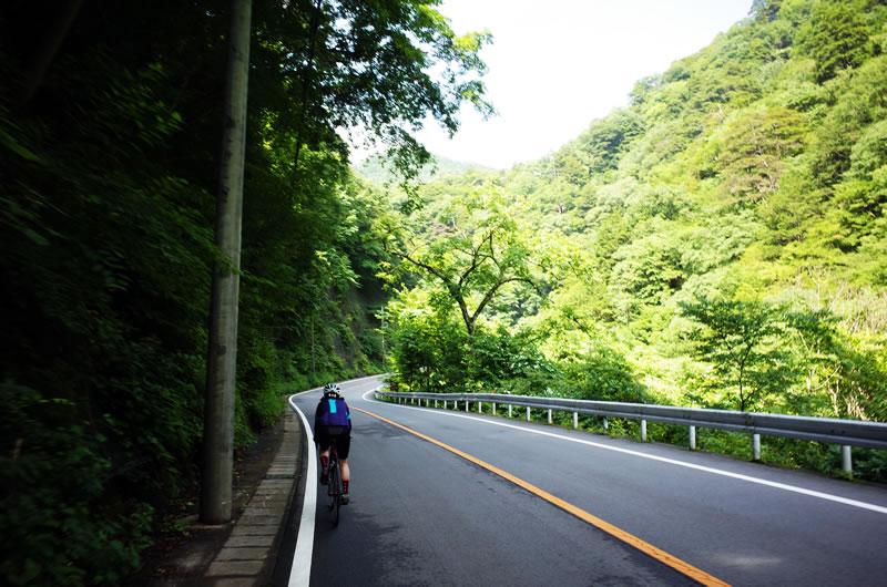 木陰が快適で気持ちいい柳沢峠への道