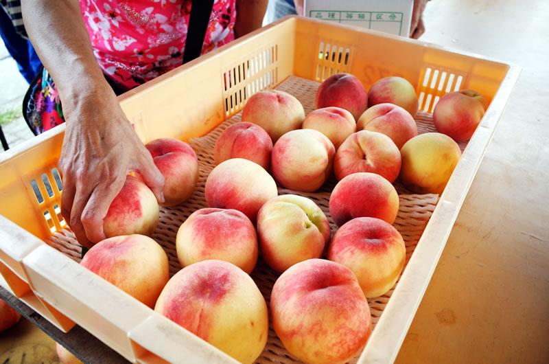去年の7月は山梨に桃を食べに行ったり