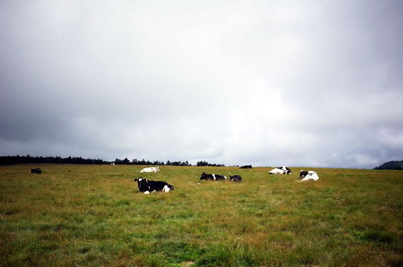牛さんはまったく無関心(*´ω`*)