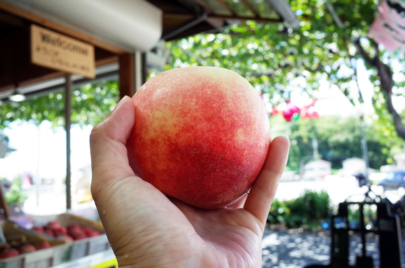 果樹園で採れたての桃をその場でいただく贅沢(*´ω`*)