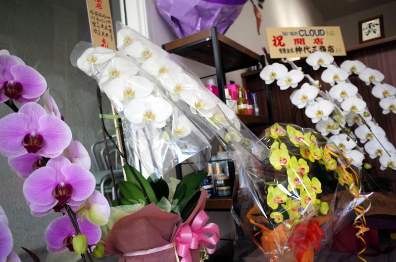 お祝いの胡蝶蘭も所せましと並びます(*´ω`*)