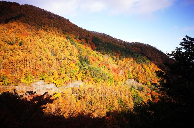 山一面、紅葉が真っ盛り!!!